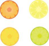 Zitrusfruchtscheiben vektor abbildung