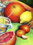 Zitrusfruchtstillleben mit Biene Stockbilder