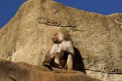 Zittend op de bovenkant een rots Royalty-vrije Stock Foto