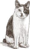 Zittende binnenlandse kat Stock Afbeeldingen