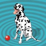 Zittende dalmatian met een bal Royalty-vrije Stock Foto
