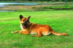 Zitting die van de hond de Leuke Glimlach in gras buiten spelen Stock Foto's
