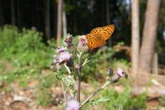 Zitting van de close-up de mooie vlinder op bloem in de lente stock foto