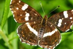 Zitting van de close-up de mooie vlinder op bloem in de lente royalty-vrije stock afbeelding