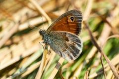 Zitting van de close-up de mooie vlinder op bloem in de lente stock afbeeldingen