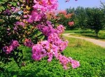 Ziwei blommor Arkivbild