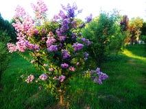 Ziwei blommor Arkivbilder