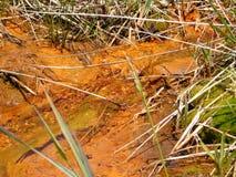 Zjadliwy Kopalniany drenaż w Appalachian górach Fotografia Stock