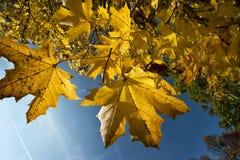 Zlani kolory jesień w forrest Obraz Stock