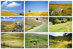 Zlatibor fields and meadows. Collage with beautiful fields and meadows from mountain Zlatibor in Serbia Royalty Free Stock Image