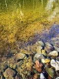 Zlatibor góra Zdjęcia Royalty Free