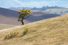 Zlatibor landscape with the lonely tree Royalty Free Stock Photos