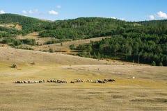 Zlatibor landscape. Mountain Zlatibor beautiful landscape with ships Stock Photography