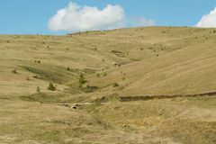 Zlatibor pastures. Pastures in Zlatibor, grazed and cultivated various kinds of domestic animals Royalty Free Stock Photo