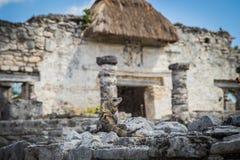 zlokalizować majów półwysep Meksyk niszczy Tulum Yucatan stare miasto Tulum Archeologiczny miejsce Riviera majowie Meksyk Zdjęcia Stock