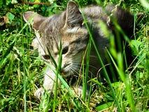 Zmęczeni pasiaści kotów poziewania Portret domowy z włosami tabby Tom kot relaksuje w ogródzie Zamyka up śpiący tomcat lying on t obraz royalty free