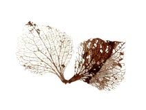 zmarłych liście jesienią Obrazy Royalty Free
