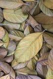 Zmarniały liścia tło Zdjęcia Royalty Free