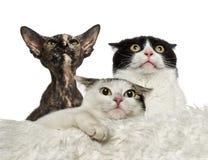 Zmartwioni koty Obrazy Royalty Free