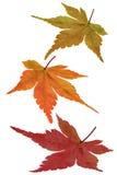 zmiana barwy Obraz Royalty Free