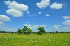 Zmiana Klimatu i Globalny nagrzanie africa Kenya krajobrazowa Mara masai łąka Piękni drzewa i kwiaty łąkowi z łąkowym salsify, cl Obrazy Royalty Free