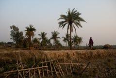 Zmiana Klimatu w Sundarban, India Zdjęcia Stock