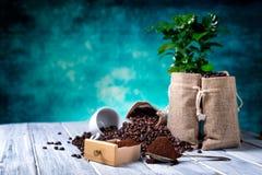 Zmielona kawa z coffe roślinami Fotografia Royalty Free