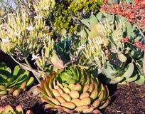 Zmielone pokryw rośliny zdjęcia royalty free