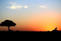 Zmieloni dzioborożec łasowania termity podczas gdy słońce ustawia nad Afryka fotografia stock