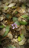 Zmielony kwiat Fotografia Royalty Free