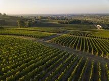 Zmierzchów bordów krajobrazowy wineyard France, natura zdjęcia royalty free