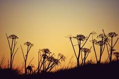 Zmierzchów kwiaty Zdjęcie Stock