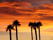 zmierzchów palmowi drzewa Zdjęcie Stock