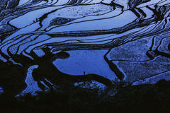 Zmierzchów ryżowi tarasy Yunnan Chiny obrazy stock
