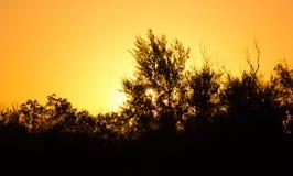 Zmierzch behind drzewo Obrazy Stock