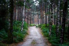 Zmierzch, drzewa, sposób Poço Azul, park narodowy Peneda-Geres, Zdjęcia Royalty Free