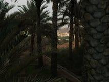 Zmierzch drzewna palma z domami Zdjęcia Stock