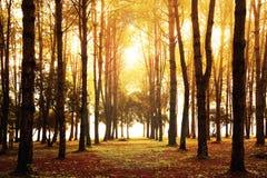 Zmierzch, drzewo fotografia royalty free