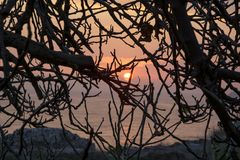 Zmierzch gałąź drzewo Zdjęcia Stock