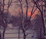 Zmierzch godzina w śnieżnym parku Zdjęcia Royalty Free
