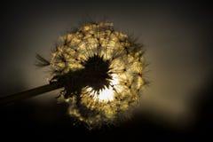 Zmierzch i kwiat Obrazy Royalty Free