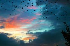 Zmierzch i ptaki obrazy royalty free