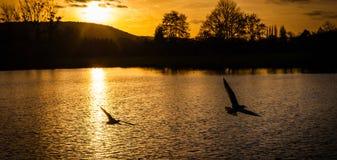 Zmierzch i ptaki Fotografia Stock