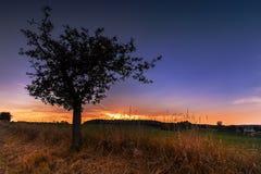 Zmierzch i sylwetka drzewo z dojrzałymi jabłkami fotografia stock