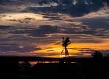 Zmierzch krajobrazowe Ciemne sylwetki nieżywy kokosowy drzewo, Obrazy Stock