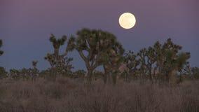 Zmierzch księżyc wzrasta Joshua drzewa zbiory wideo