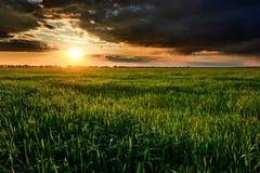 Zmierzch, lato krajobraz, jaskrawe kolorowe chmury jako tło, niebo, zieleni pole i drzewa, Obraz Royalty Free