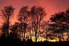 Zmierzch lub wschód słońca w lesie Obrazy Royalty Free