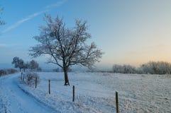 Zmierzch mroźny zima dzień Zdjęcie Stock