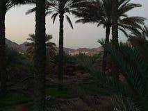 Zmierzch na drzewnej palmie Obrazy Royalty Free